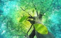 [Truyện Ngắn] Cây – Lá và Gió